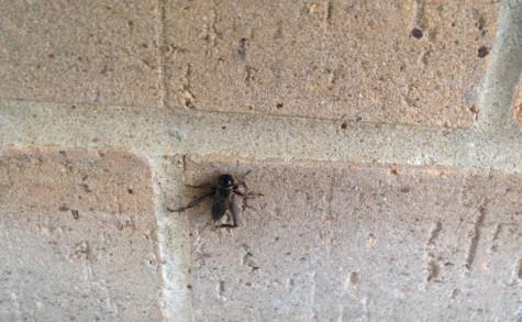 Oh, Crickets