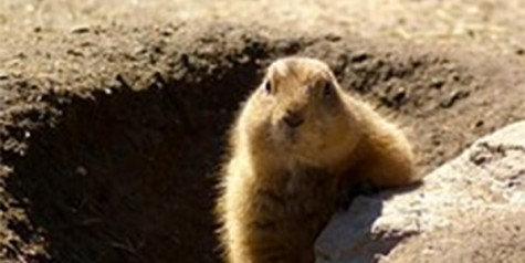 The story behind Groundhog Day