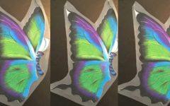 Students soar in butterfly art contest