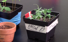 Growing plants to further knowledge