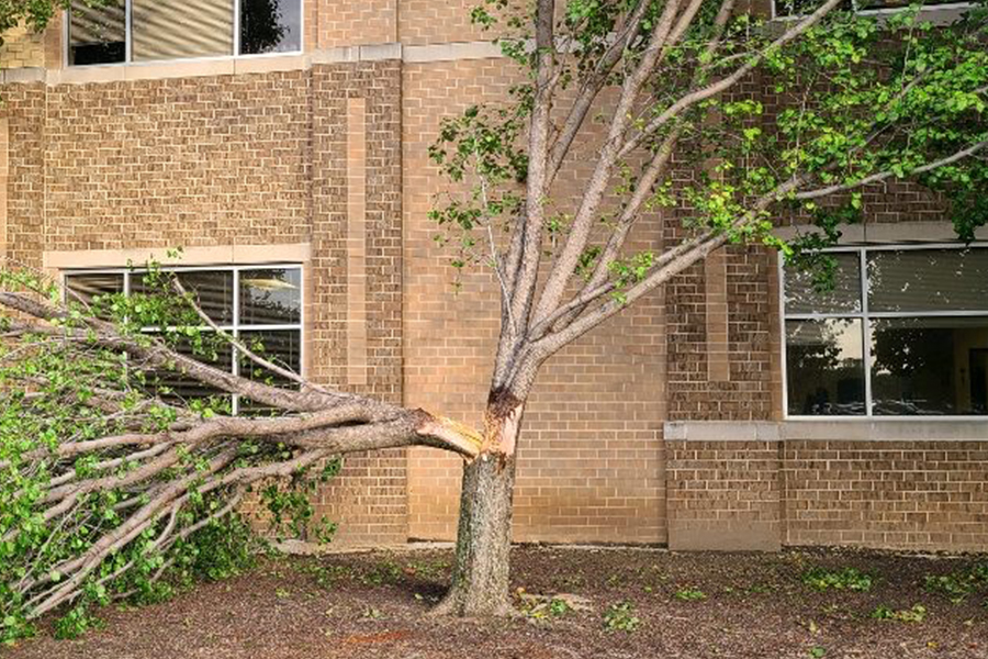The school wasn't spared from the high winds that whipped through the area as one of the trees in front of the school, outside the social studies hall, was split almost in half from winds.