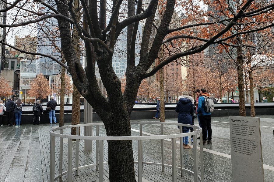 Located near the 9/11 Memorial Pools is this Callery pear tree. Called the