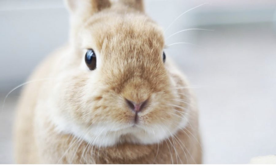 As many countries begin to ban cosmetic testing on animals, new methods arise that promote the idea of cruelty-free cosmetics.