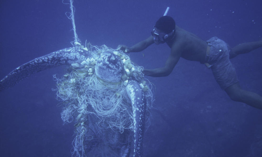 Vegan View takes a dive beneath the surface in exploring the issue behind commercial fishing.