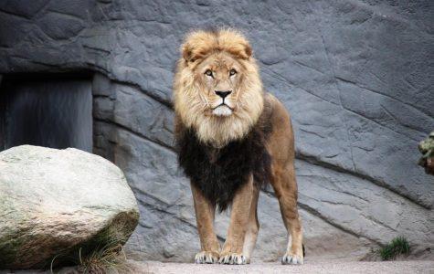 Sanctuaries v zoos: part 2
