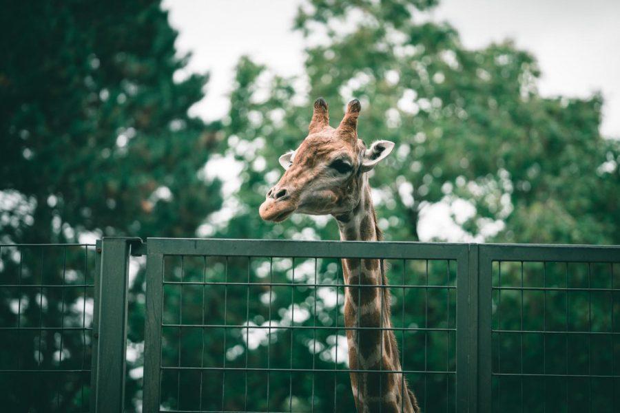 Sanctuaries v. zoos: part one
